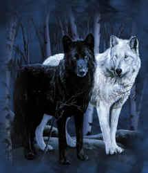 Doi lupi in astrograma